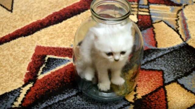 瓶の中に入り込んだ子猫。出たいの?、出たくないの?、どっち?
