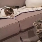 ケンカを始めた同居猫たち。高速連続猫パンチを繰り出すも意外な結果に…