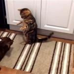 ケンカを始めた犬と猫。緊迫したムードが一瞬にして白けたムードに(笑)