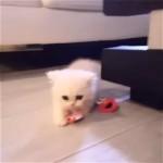 おしゃぶりを返す気がない子猫。部屋中を逃げ回る姿がカワイ過ぎ!♡