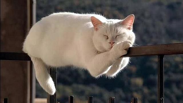 所構わずどこででも寝てしまう猫たちのホッコリする写真集 25枚