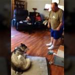 まるでコント(笑)|飼い主に盗み食いを叱られ、猛烈に口答えをする犬