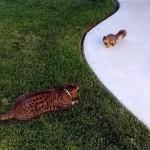 睨み合う猫とリス。追いかけっこを始めた結果、意外な結末に…(笑)