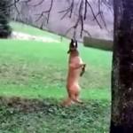 木の枝に飛びついて楽しそうに遊ぶワンちゃん♪