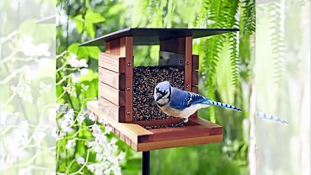 鳥好きの男性、自宅テラスに鳥のエサ箱を置いてみた結果、とんでもないことに…