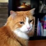 のどをゴロゴロ振るわせる音がまるで小鳥のようで面白かわいい猫