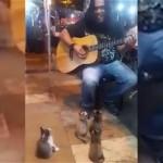 ストリートミュージシャンの歌声に熱心に聴き入る4匹の子猫たち♪