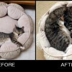 子猫から成猫へ…、時の流れを感じさせる猫たちのビフォーアフター写真集 30選