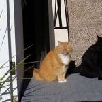 「あれ?この猫の影がちょっと変…」と思いきや、なんてこった!