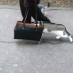 初めての外出|飼い主のカバンに顔を突っ込んで散歩する奇妙なネコ