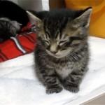 睡魔と戦いながら舟を漕ぐ子ネコ。耐え切れなくなってかわいい行動に…