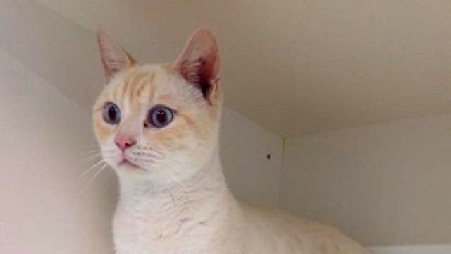 ヤンチャし過ぎて保護施設に返された猫。面白い特技を引っさげて再びチャレンジ! 4枚