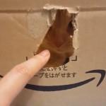 ダンボール箱にろう城するネコ。指を近づけるとかわいい反応が…
