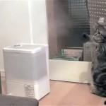 加湿器に立ち向かう猫。猫パンチが当たらず意気消沈(笑)