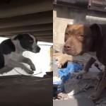 感動が止まらない|2匹の野良犬の深い絆