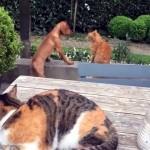 子犬と猫のケンカの加勢に入ったもう一匹の猫。ワンちゃん危うしと思いきや意外な結末に