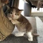 トラックにしがみつく迷子の子猫を保護したらこんなに幸せな姿を見せてくれた♪ 5枚