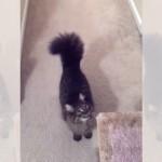 「困ったにゃ~」あちらを立てればこちらが立たず。飼い主夫婦の呼びかけに苦悩する猫