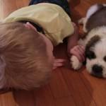 さすが現代っ子!|子犬のしつけ方が斬新すぎる4歳の男の子