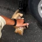 タイヤ交換の助っ人に参入するも、おじさんから呆気なく戦力外通告を受ける子猫(笑)