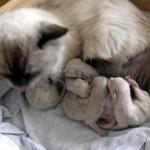 生後50日間のかわいい子猫の成長の様子を撮影したタイムラプス映像