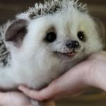 ウールで作った小さくてかわいい動物たちの写真集 13枚