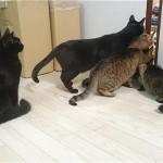 掃除機が苦手なネコたち。でも、怖いもの見たさで気になるご様子(笑)