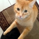 外出を引き止めようとする愛猫の「いかないで」攻撃が激し過ぎ!(笑)