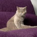 脚を組んだりあぐらをかいたり、座り方が人間っぽくて面白かわいい猫たち 31枚