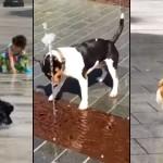 噴水を追って楽しそうにひとりで遊ぶワンちゃんたちの映像集