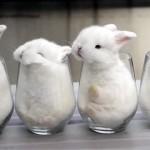赤ちゃんウサギ4匹(羽)をガラスコップの中に入れた結果、こんなかわいいことに…