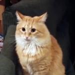 にゃんだ~!?|背後にぴったり張り付いた見えない敵に翻弄されまくるネコ(笑)