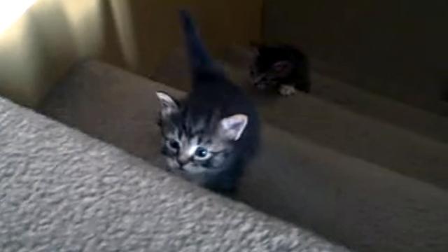 思わず応援したくなる子猫たちの階段初登り体験