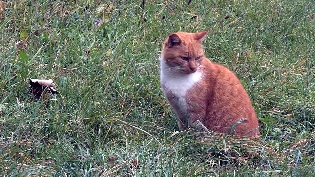 出歩く猫にGPSをとりつけて追跡してみたところ、行動範囲に驚きの結果が… 3枚