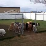 名前を呼ばれるとフェンスの外に順番に出てくる16匹のワンちゃんたち。の筈だったのに…