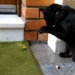これは意外!|黒猫 と やる気満々なカマキリが戦った結果