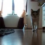 お母さんを探し回り、家の中で迷子になった子猫