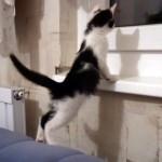 窓枠に登りたい子猫。一生懸命がんばってみたけど悲しい結末
