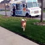 散歩の途中、アイスクリームを買ってもらってご機嫌なワンちゃん。
