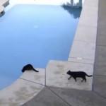プールの水を飲んでいる猫に背後から近づいて来た兄弟猫。それはアカンやろ!