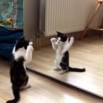 生まれて初めて鏡と対面。鏡に映った自分と戦う子猫(笑)