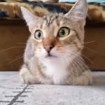 猫を見ている方が映画よりも数倍楽しめる、ホラー映画を見入っている猫のリアクション(笑)