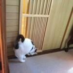 前転すると引き戸が開いて脱走できると勘違いした猫