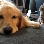 先輩犬の様子をうかがう新入りの子猫。ドキドキしながら挨拶をした結果