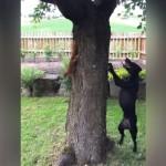 木の周りをぐるぐる回りながら追いかけっこをする犬とリス