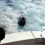猛スピードでボートを追いかけてくるアシカ。果たしてその目的は?