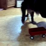 オモチャのワゴンに乗って遊んでいる子猫をワンコが鼻先で突いてみた結果(笑)