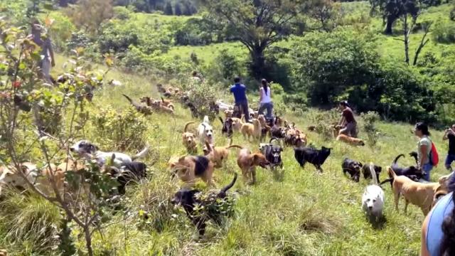 犬好きには堪らないコスタリカの美しい山中にある野良犬の楽園