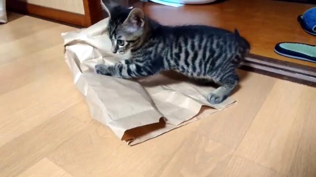 大好きな袋の中に入ってくれない猫。じつはこんな理由が…