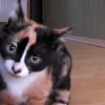 BGM効果で「だるまさんが転んだ」がホラーっぽくなった猫。怖すぎ!